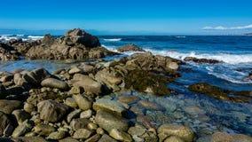 在Pebble海滩附近,台尔Monte Forest,加州 免版税库存图片