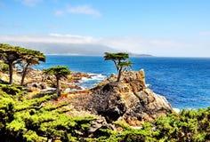在Pebble海滩的孤立柏树在加利福尼亚 库存照片