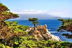 在Pebble海滩的孤立柏树在加利福尼亚 免版税库存图片