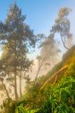 在Penanjakan的有薄雾的早晨1 Bromo 图库摄影