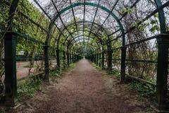 在Peterhof成拱形绿色隧道或走廊有路的 库存图片