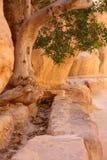 在Petra的天沟 免版税库存照片