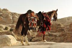 在Petra的阿拉伯马 图库摄影