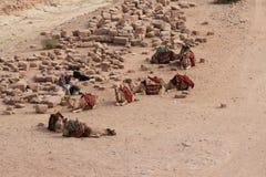 在Petra的骆驼,约旦 免版税库存照片