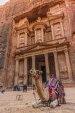 在Petra财宝前面的骆驼 免版税库存照片