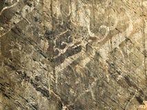 在petrogliphs,石表面上的太阳雄鹿的动物样式 库存图片