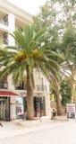 在Petrovac,黑山沿海岸区的棕榈树  免版税库存图片