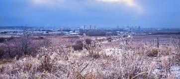 在Pezinok市的看法在布拉索夫和葡萄园在冬天,斯洛伐克附近 免版税库存照片