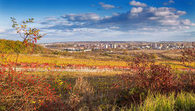 在Pezinok市的看法在布拉索夫和葡萄园日落的在11月,斯洛伐克附近 免版税库存图片