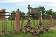 在Phra普朗山姆Yod的猴子在Lopburi 库存图片