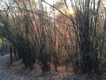 在Phu Kradueng国家公园的日落 免版税库存照片