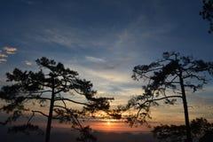 在Phu Kradueng的早晨阳光 库存照片