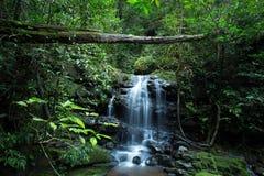 在Phu Soi Dao国家公园的Saithip瀑布 免版税库存照片