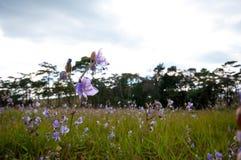 在Phu Soi Dao的紫色花 库存照片