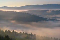 在Pieniny山小山的美丽的雾 免版税库存照片