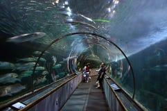 在Pier39水族馆的水族馆 免版税库存照片