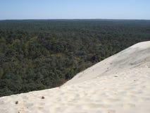 在Pilat沙丘的倾斜的后森林  库存图片