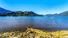 在Pitt湖岸的漂流木头有雪的加盖了金黄耳朵山的峰顶 免版税库存照片
