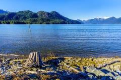 在Pitt湖岸的漂流木头有雪的加盖了金黄耳朵山的峰顶 免版税库存图片