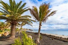 在Playa布朗卡沿海散步的热带棕榈树 图库摄影