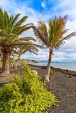 在Playa布朗卡沿海散步的热带棕榈树 库存照片