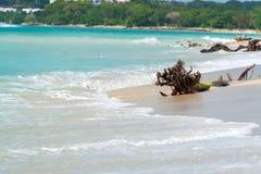 在Playa布朗卡的海滩 库存图片
