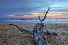 在Playa Avallena,哥斯达黎加的干燥木头 免版税库存图片