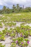 在Playa Guiones的桃红色花 免版税库存图片