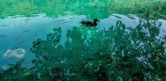 在Plitvice湖国家公园,克罗地亚的野生生物 免版税库存图片