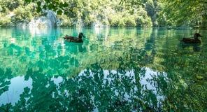 在Plitvice湖国家公园,克罗地亚的野生生物 库存照片
