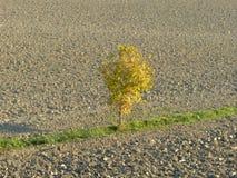 在Po谷的农村风景-意大利01 免版税库存图片