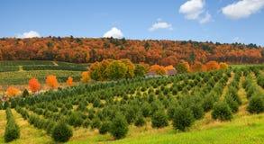 在Pocono山PA的美好的秋天。 免版税库存图片