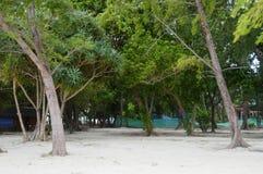 在PODA海岛海滩的热带树在KRABI泰国 免版税库存图片