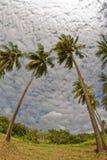 在Pointe du Bout的椰子树使-列斯Trois Ilets -马提尼克岛靠岸 免版税图库摄影