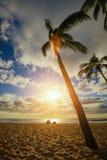 在poipu海滩公园,考艾岛, hawai `的棕榈树我 免版税库存照片