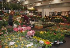 在Pollice Verde的植物摊位 库存照片