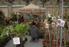 在Pollice Verde的植物摊位 图库摄影