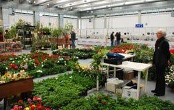 在Pollice Verde的植物摊位 库存图片