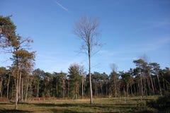 在Polygoon木头的树在佐内贝克(富兰德,比利时) 免版税库存图片