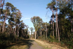 在Polygoon木头的树在佐内贝克(富兰德,比利时) 库存照片