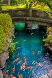 在pong的美好的koi鱼游泳在一条小河,绿色灌木包围的池塘在日本庭院浅草Kannon里 免版税库存照片