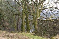 在Pontsticill水库的废墟 库存图片