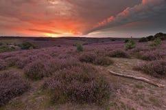 在posbank的紫色领域 免版税库存照片