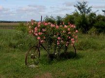在Pouilly苏尔卢瓦尔河,伯根地,法国开花被盖的自行车 免版税库存图片
