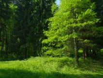 在prak的绿色树与新鲜的绿草和年轻橡木tre 库存照片