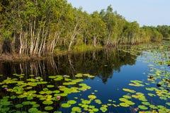 在Pruksa庭院池塘的莲花 免版税库存图片