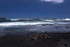 在punalu'u国家公园的绿浪乌龟 图库摄影