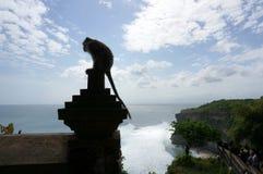 在Pura Luhur Uluwatu寺庙巴厘岛的猴子 库存照片