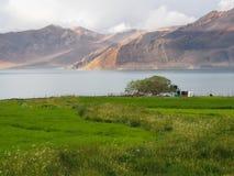 在Rain湖和山lanscape以后的绿色领域 库存图片