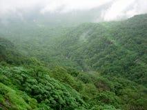 在rainclouds的森林 免版税库存图片